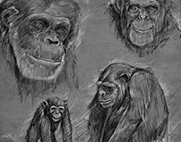 Chimp Studies