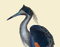 Infertile Birds: Genus Gruimorphae (collage)