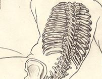 Anatomical/Skeletal Drawings