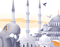 Pigeon in Istanbul