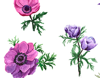 Flowers sets in watercolor