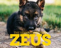 Zeus The German Shepherd