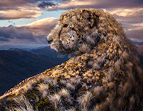 Cheetah series