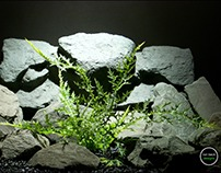 aquarium plants: dragons breath from ron beck designs.