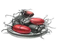 """Red Beetles"". (20x30), September 2016"