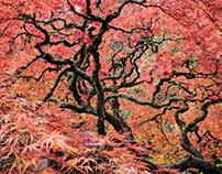 Avatar Tree of Life