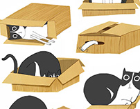 The cat and the box