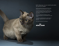Magazine Campaign - Royal Canin