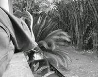 Fotografías en el parque san Felpe el fuerte...