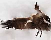 National Geographic: Ruppel's Vulture