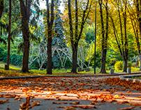 Summer day in Kiev park