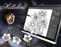 Hellebore or Helleborus or Winter rose.