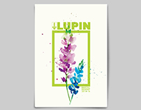 Lupin-annual report