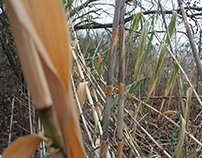 Rule of Thirds Bamboo Photo