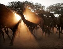 Pushkar Camel Fair-India