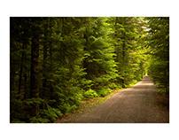 Eric Copeman - Forest Path