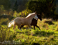 Horse Photograpy by Sandra Rust
