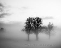 winter wonderland - Edition of 3