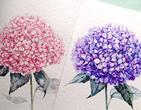 Purple and pink Hortensias!