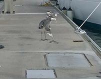 Crane picking up fish