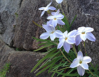 Flower on a stone wall