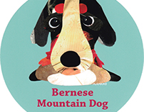 046 | Bernese Mountain Dog