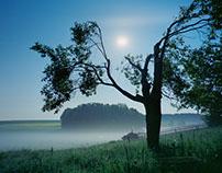 illuminated nature