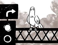 Dlaczego przenigdy nie dokarmiać gołębi
