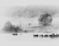 Landscape in mono / Krajobraz w mono