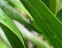 Lluvias, lugares, naturaleza