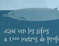 What beaked whales see at 1,000 meters deep?