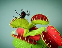 Venus Anttrap Beetle