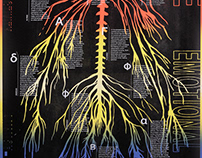 Atlas of the Emotional Brain