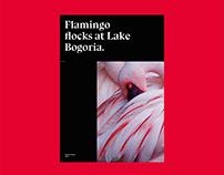 Flamingo flocks | Editorial