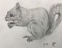 Squirrel - graphite drawing