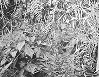 Del paisaje / Vegetación