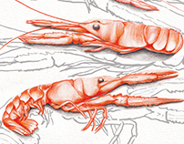 Food illustration. Langoustines