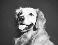 Legal Dog Owner