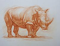 Rhinoceros Nosorożec ,crayon, Kredka A3