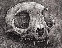 Cat Skull 2