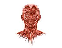 Anatomy Anomalies