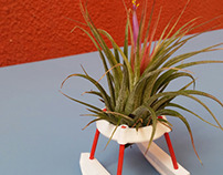 AIRPLANT(ER)S