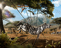 Zebra in another world