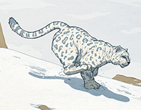 Snow Leopard Chase