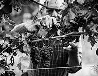 Vite Colte | ADV Harvest in Barolo
