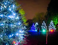 Choir of the Christmas Trees