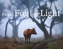 From Fog Into Light
