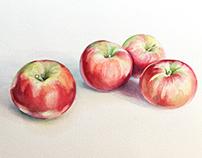 Honey crisp apple study