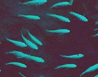 blaufish