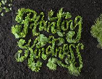 Planting Kindness | Danielle Evans